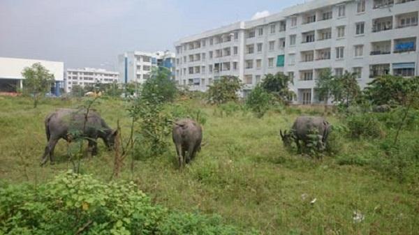 Khu tái định cư Vĩnh Lộc B, huyện Bình Chánh, TP HCM