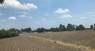hiều lô đất nông nghiệp mới được san lấp đang rao bán rộng rãi cho những nhà đầu tư có nhu cầu.
