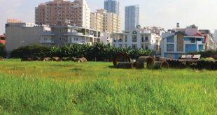 Đất quy hoạch đại học Hưng Long đến giờ vẫn bị bỏ hoang.