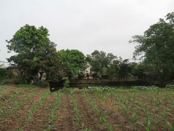 Việc chuyển đổi đất nông nghiệp sang công nghiệp và dịch vụ sẽ mang lại lợi ích lớn cho cả người dân và chính quyền TPHCM.