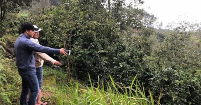 Khách đang tìm hiểu một khu đất đồi chè ở Cầu Đất (Đà Lạt) với mục đích đầu tư homestay