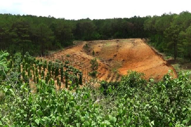 Trên 70 sổ đất rừng được để quên trong tủ hồ sơ của cán bộ địa chính huyện Gio Linh