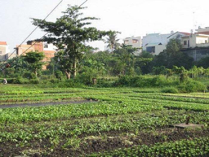 Vườn rau Lộc Hưng.