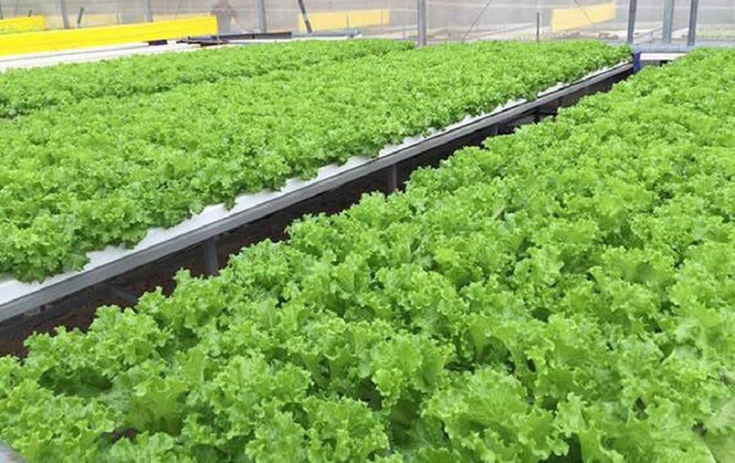 Tiện ích nội khu dự án Celesta Rise Vườn rau hữu cơ