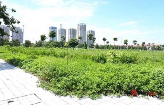 CEO Asian Holding cho hay, mức tăng giá của đất nền dao động từ 30-40% mỗi năm, do đó nếu đầu tư trung hạn 2-3 năm thì tài sản sẽ nhân đôi.